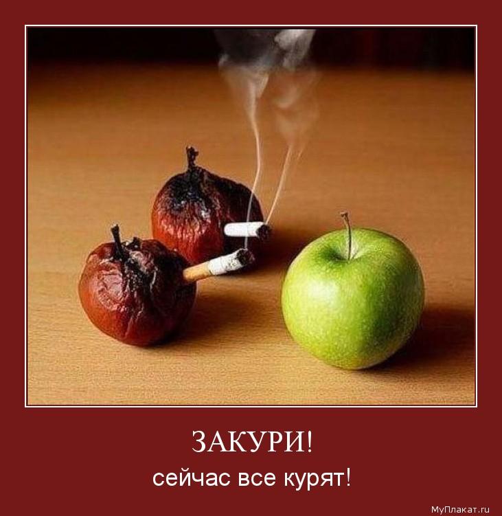 ЗАКУРИ! сейчас все курят!