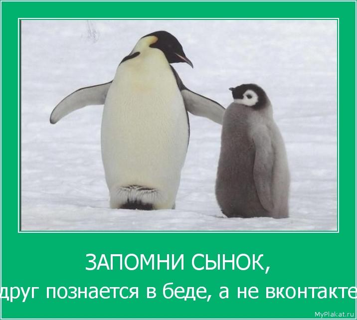 ЗАПОМНИ СЫНОК, друг познаётся в беде, а не вконтакте