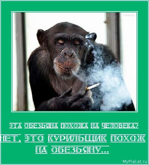 ЭТА ОБЕЗЬЯНА ПОХОЖА НА ЧЕЛОВЕКА? Нет, это курильщик похож на обезьяну...