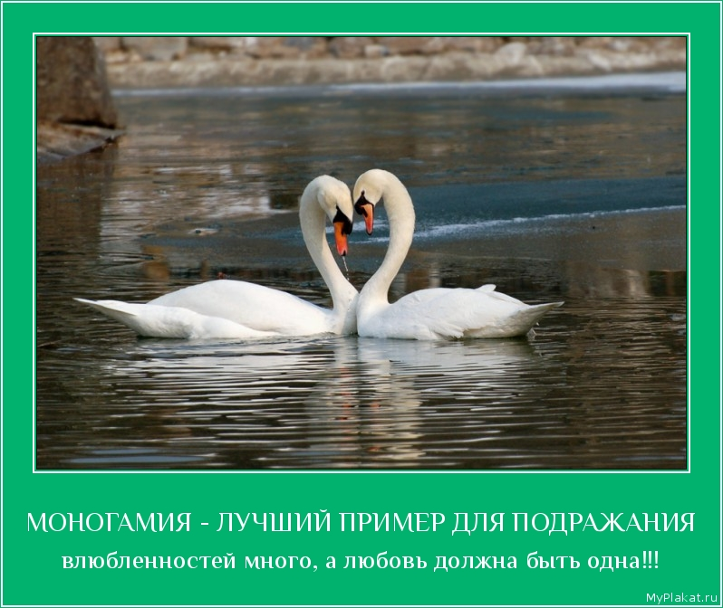 МОНОГАМИЯ - ЛУЧШИЙ ПРИМЕР ДЛЯ ПОДРАЖАНИЯ влюблённостей много, а любовь должна быть одна!!!
