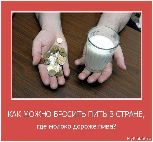 КАК МОЖНО БРОСИТЬ ПИТЬ В СТРАНЕ, где молоко дороже пива?