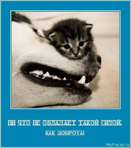НИ ЧТО НЕ ОБЛАДАЕТ ТАКОЙ СИЛОЙ, как доброта!