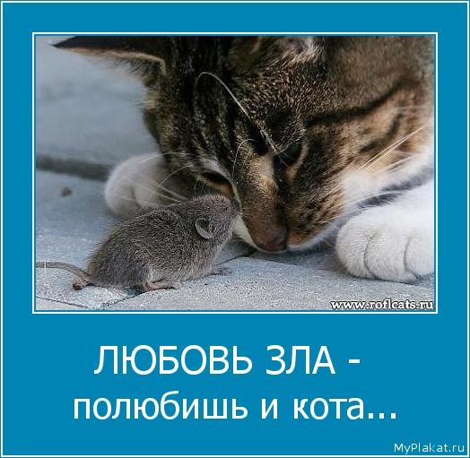 ЛЮБОВЬ ЗЛА -  полюбишь и кота...
