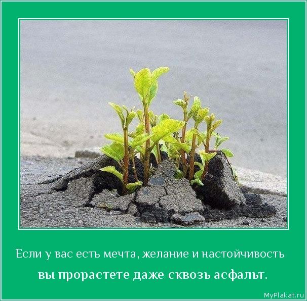 Если у вас есть мечта, желание и настойчивость   вы прорастете даже сквозь асфальт.