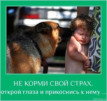 НЕ КОРМИ СВОЙ СТРАХ.