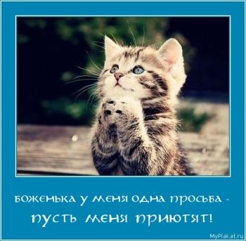 БОЖЕНЬКА У МЕНЯ ОДНА ПРОСЬБА -