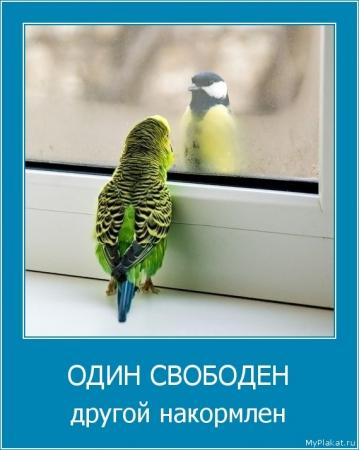 ОДИН СВОБОДЕН