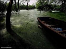 НЕ СТРЕМИТЕСЬ НИ К ЧЕМУ ... - преврати свою жизнь в болото.