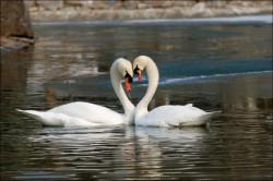 МОНОГАМИЯ - ЛУЧШИЙ ПРИМЕР ДЛЯ ПОДРАЖАНИЯ - влюблённостей много, а любовь должна быть одна!!!