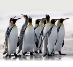 DISCOVERY OF OIL IN ANTARCTICA - bloody penguin regime will end soon