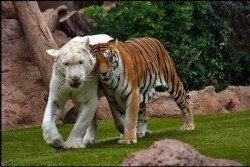 ФАШИСТОВ НАЗЫВАЮТ ЖИВОТНЫМИ, - но животным фашизм не известен ...