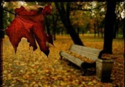 НЕ ТОРОПИСЬ РАСТАТЬСЯ С ЖИЗНЬЮ! - каждый лист опадает в свое время...