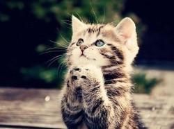 БОЖЕНЬКА У МЕНЯ ОДНА ПРОСЬБА - - пусть меня приютят!