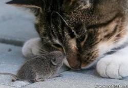 ЛЮБОВЬ ЗЛА -  - полюбишь и кота...