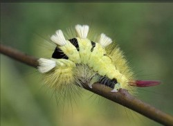 ОНА ОБЯЗАТЕЛЬНО ИЗМЕНИТСЯ - а кем станешь ты: гусеницей, или бабочкой?