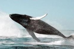 САМОЕ ТЯЖЕЛОЕ В ЖИЗНИ  - это синий кит, всё остальное пустяки