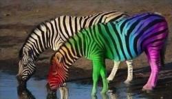 ЖИЗНЬ - ОНА ПОЛОСАТАЯ, - но только ты выбираешь цвета
