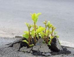 Если у вас есть мечта, желание и настойчивость   - вы прорастете даже сквозь асфальт.